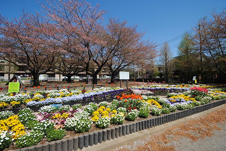 藁田島公園(徒歩5分)