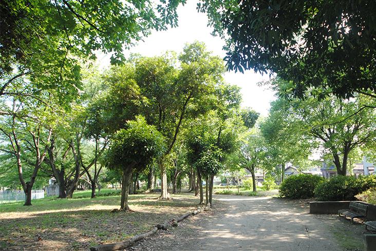 青葉公園(徒歩10分)